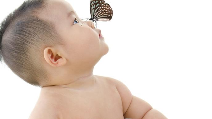 赤ちゃんの鼻から蜜を吸おうとする蝶々