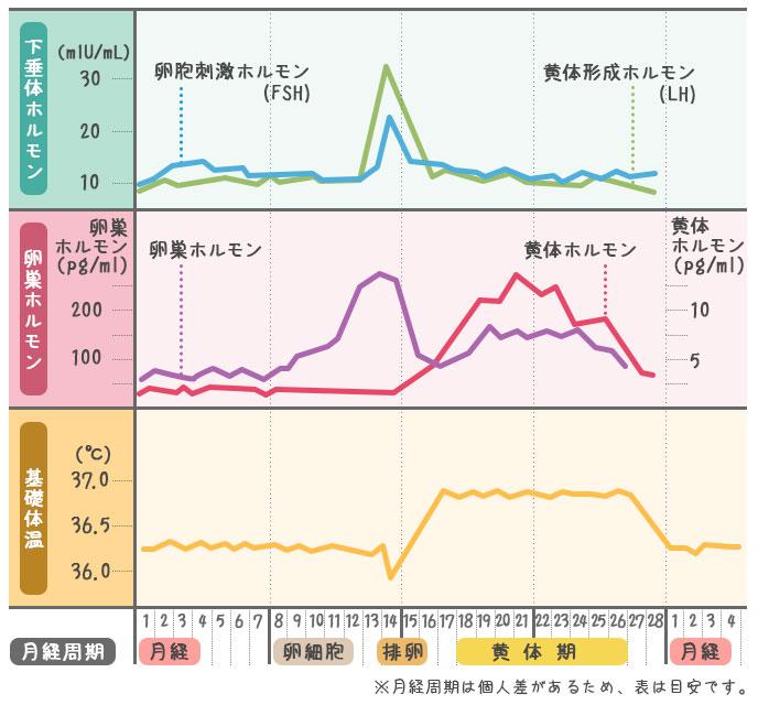 ホルモンと基礎体温のグラフ