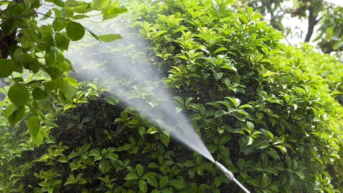 庭のお手入れで散布される殺虫剤