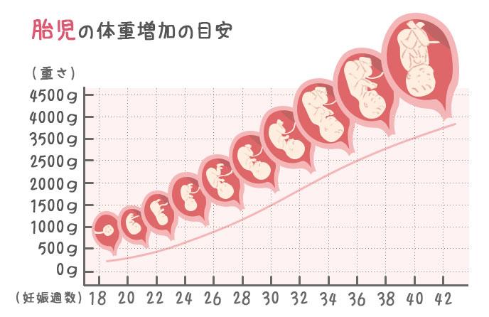 胎児の体重増加の目安