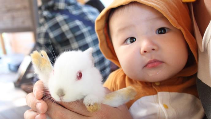 うさぎと赤ちゃんを抱っこするママ
