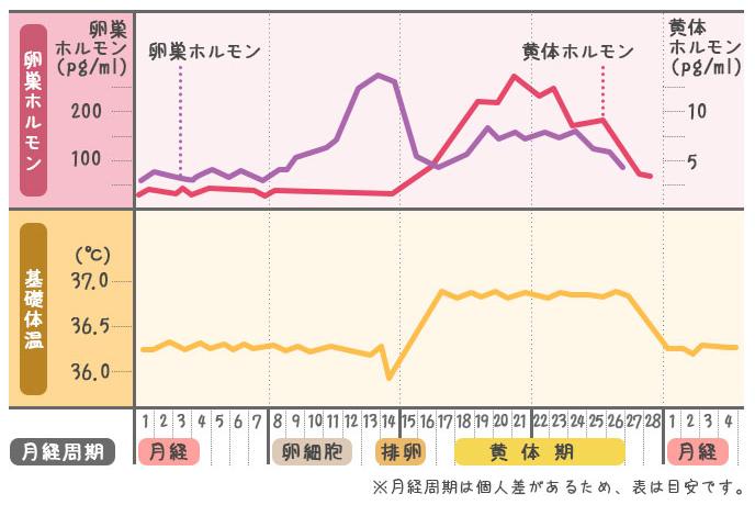 女性の体温変化グラフ