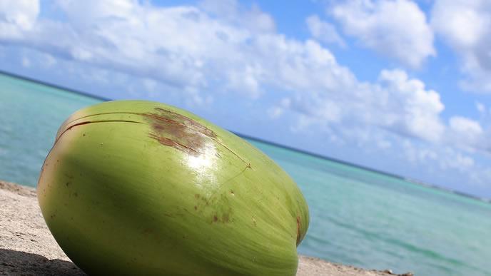 グアムの海とココナッツの実