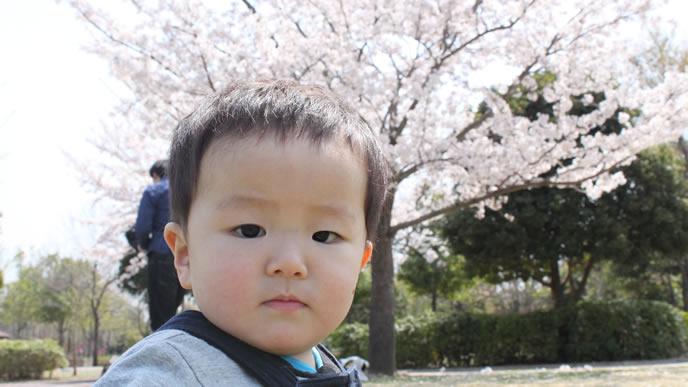 ママと満開の桜を見に来た男の子