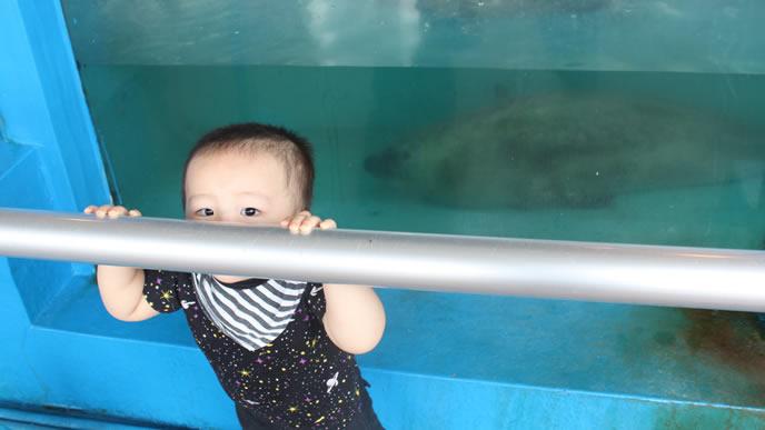 水族館のアザラシと赤ちゃんのツーショット