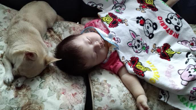 わんこと一緒に寝る赤ちゃん