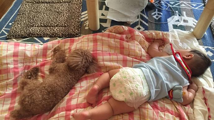 仲良しのわんこと同じ姿勢で寝る赤ちゃん