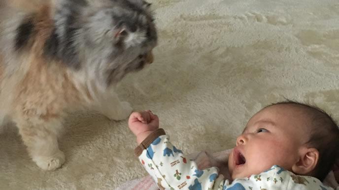 お昼寝を邪魔した猫を威嚇する赤ちゃん