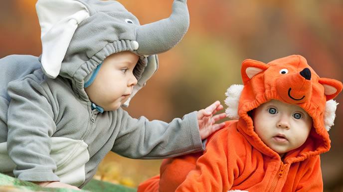 野生の赤ちゃんポケモン