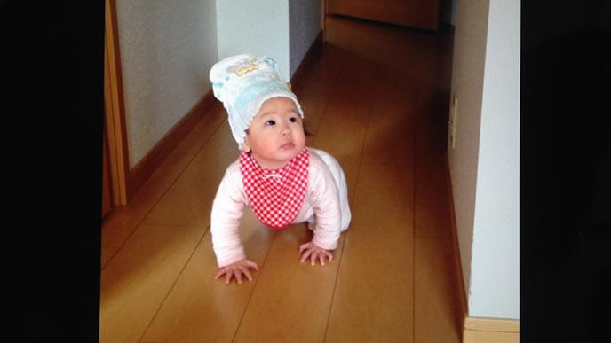 おむつをかぶりハイハイで進む赤ちゃん