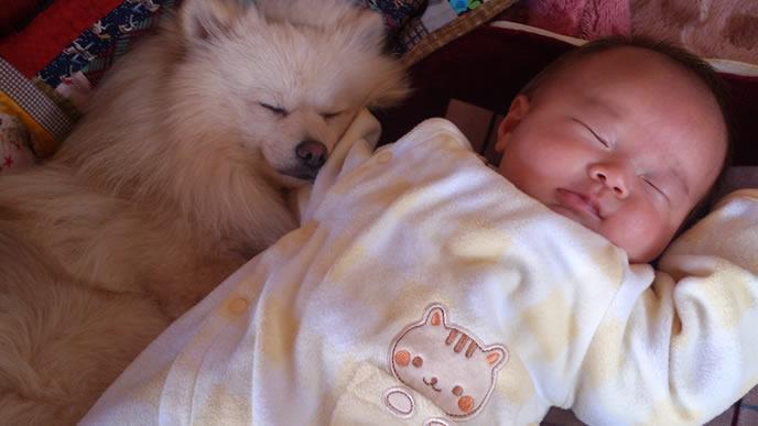 赤ちゃんを見守るように寄り添う犬