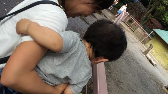 気になる動物を発見した赤ちゃん