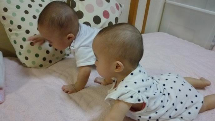 ハイハイで競争する双子の赤ちゃん