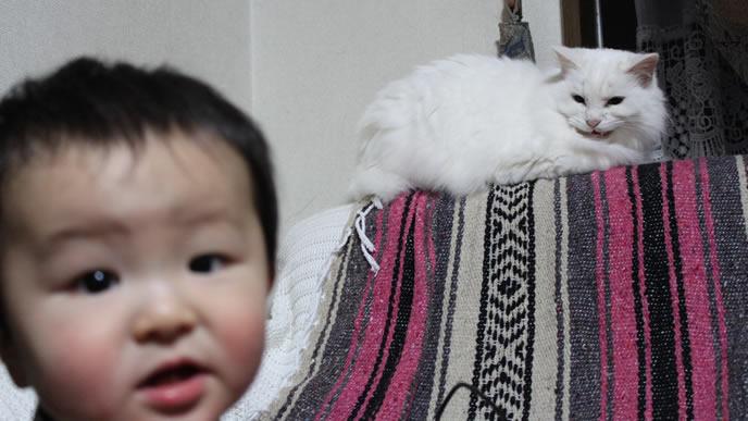 飼い猫に睨まれ慌てる赤ちゃん