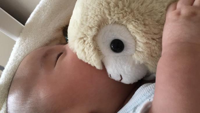 アルパカのぬいぐるみと一緒にお昼寝する赤ちゃん