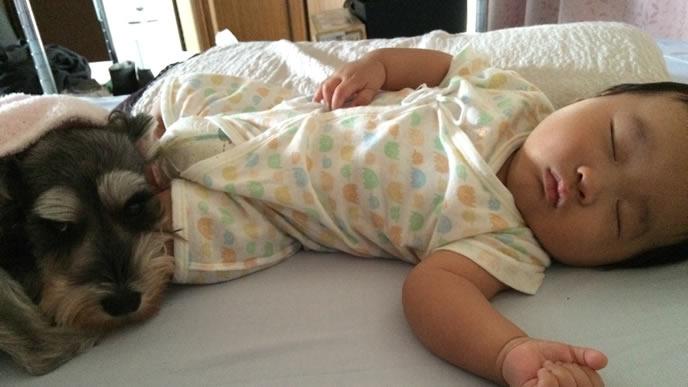 生後3ヶ月の赤ちゃんに寄り添う優しいわんちゃん