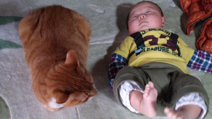 生後6ヶ月の赤ちゃんの成長を確認するにゃんこ
