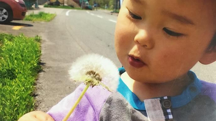 たんぽぽの綿毛で遊ぶ男の子