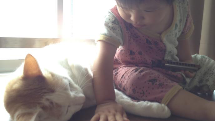 大きな猫と仲良しの赤ちゃん
