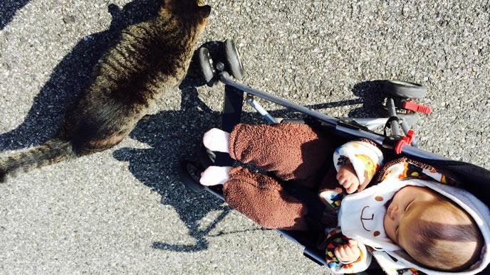 初めてのねことのふれあいにドキドキする生後5ヶ月の赤ちゃん