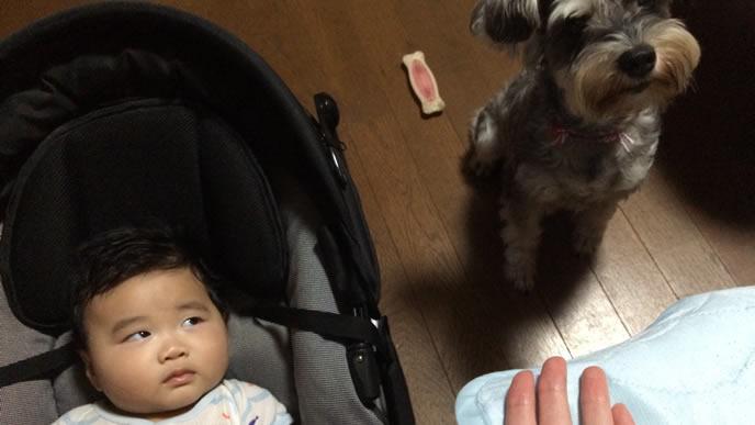 わんこがとっても気になる生後4ヶ月の赤ちゃん
