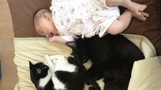 お風呂上りに猫の遊ぶ赤ちゃん