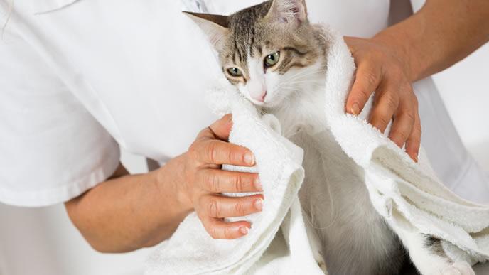 ワクチン接種が終わり安心する猫