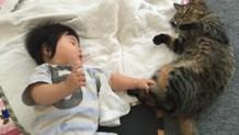 猫と赤ちゃんが仲良く暮らすために家族が知っておくべきこと