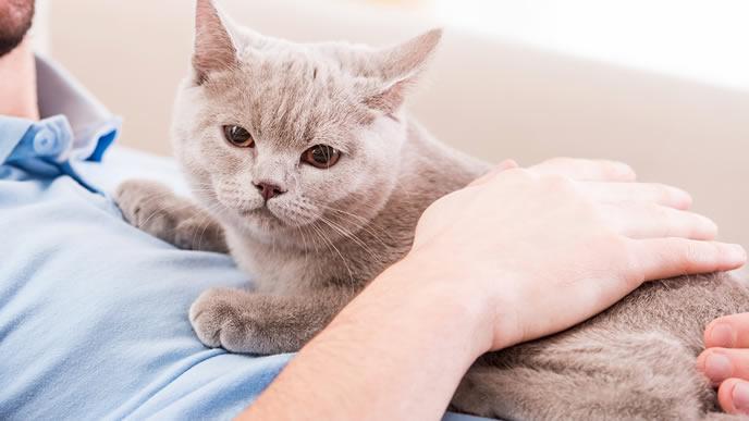 早くご飯が食べたい猫