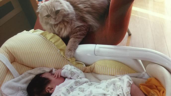 赤ちゃんに興味がある先住猫