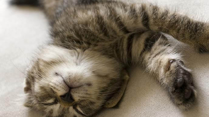 リラックスした表情で眠る猫
