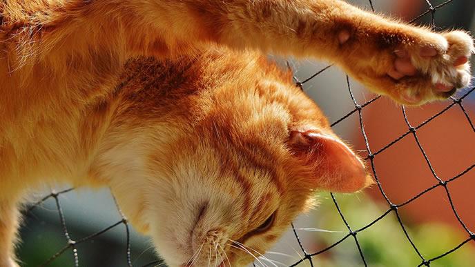 金網を使って獲物をロックオンする猫