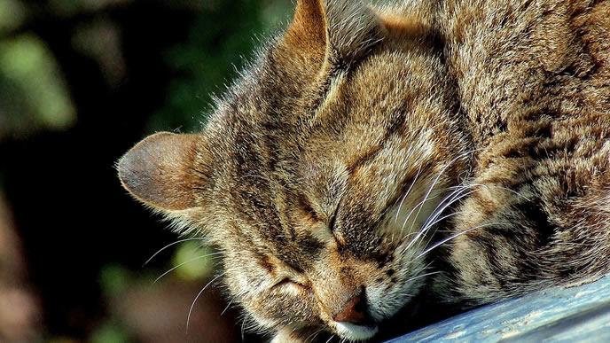 日向ぼっこ中に寝てしまった猫