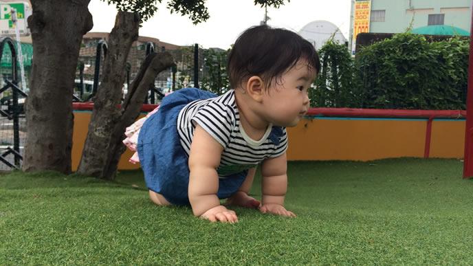 芝生でハイハイする歯が生え始めた赤ちゃん