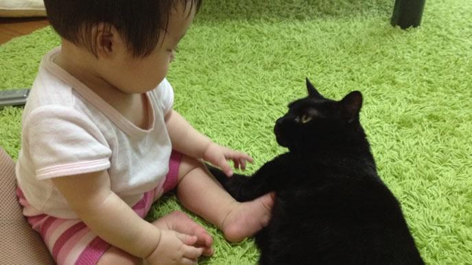 黒猫に興味があり触りたい赤ちゃん