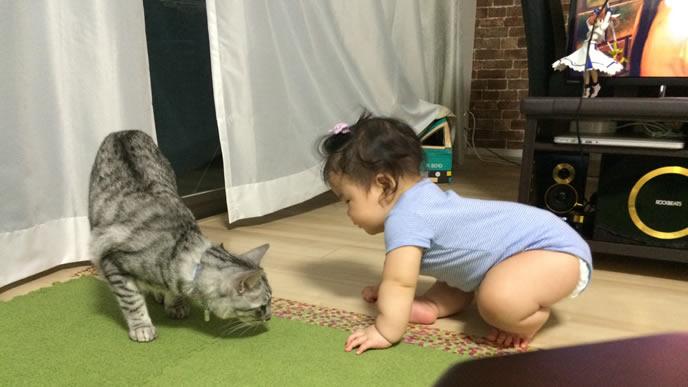 赤ちゃんの面倒をみる優しい猫