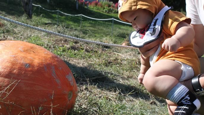 ハロウィンのお祭りに参加中の赤ちゃん