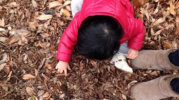 地面に座り込みまつぼっくりを拾う赤ちゃん