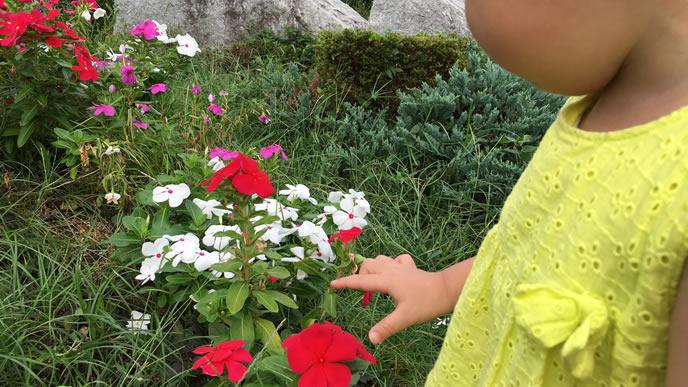 お花が大好きな男の子