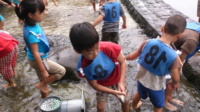 学校の授業で魚つかみをする生徒