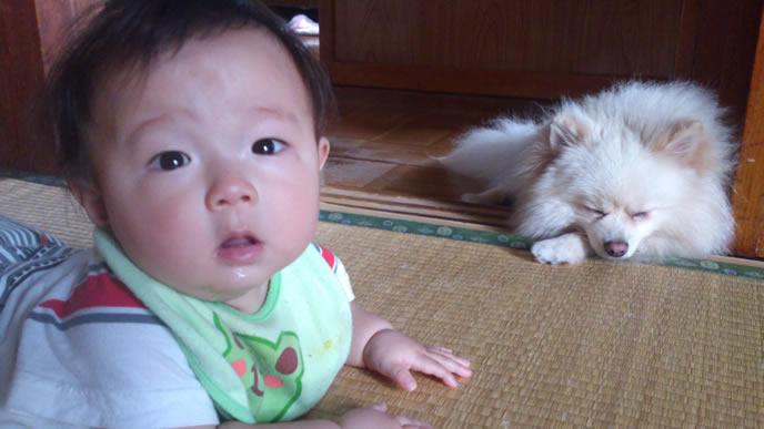 近くにいるわんこに驚く赤ちゃん