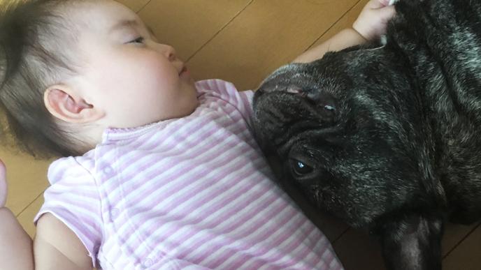 赤ちゃんと寝そべる犬