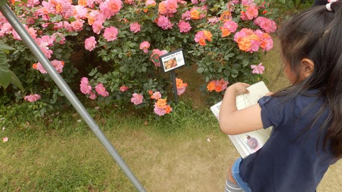綺麗に咲く花を模写する女の子
