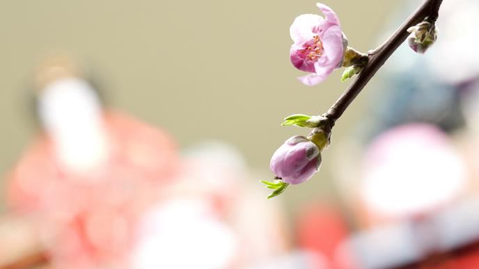 桃の節句の時期の枝