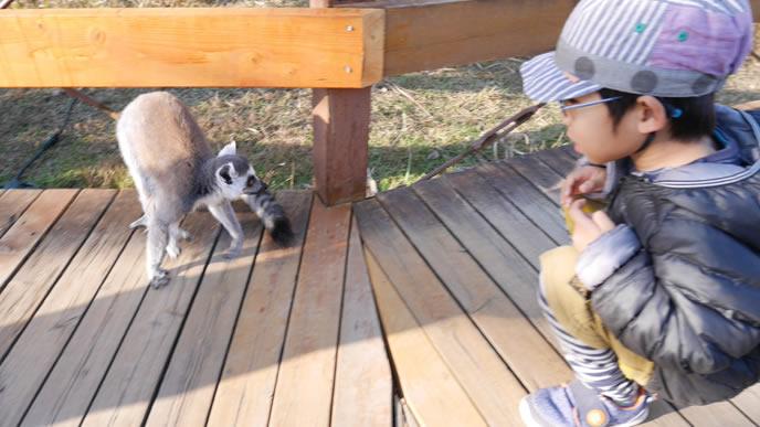 猿に興味がある男の子