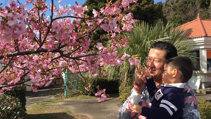 お父さんと桜の木を見る男の子