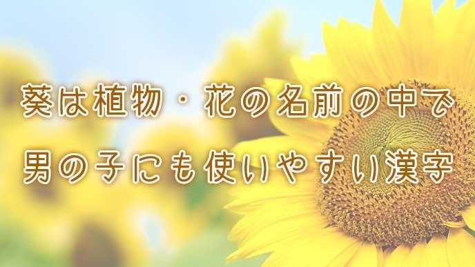 葵は植物・花の名前の中で男の子にも使いやすい漢字