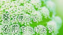 葵がつく名前をつけたい!字の意味&男の子と女の子の名前