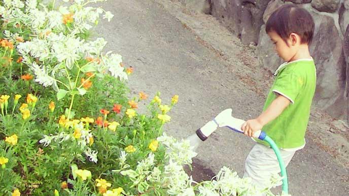 お手伝いで庭の花に水をやってる男の子