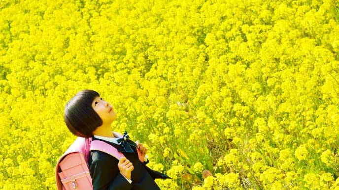 花畑にいるランドセルを背負った女の子